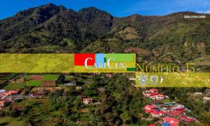 CariCen 15 – Julio-Agosto 2019